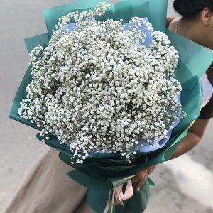 hoa-baby-trang-dep-tang-nguoi-yeu-dathoanhanh